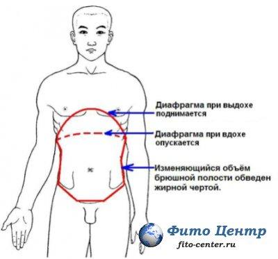 Массаж органов грудной и брюшной полостей при помощи напряжения диафрагмы.
