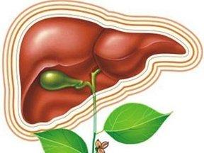 Лечение болезней печени и желчного пузыря