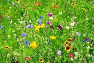 Что такое цветочный газон