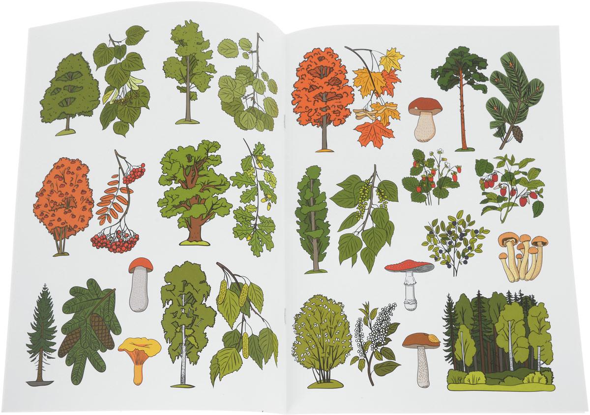 помните, что картинки деревьев с названиями и цветами получения подробной