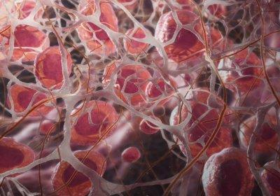 Как именно умирают клетки нашего тела