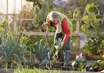 Вторая половина сентября Высадка садовых растений
