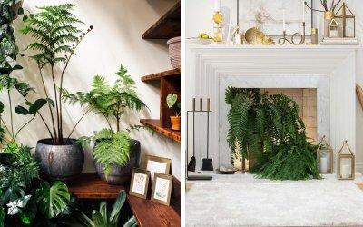 Рекомендации по уходу за наиболее популярными комнатными растениями «Б»