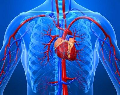 Излечение заболеваний сердца голоданием