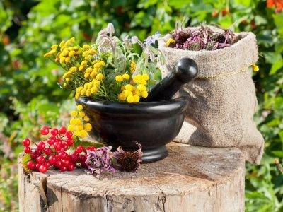 Сборы лекарственных растений при мочекаменной болезни