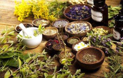 Сборы лекарственных растений при гепатитах и циррозах печени